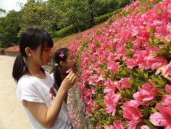 きれいなピンク色 。ほんのり蜜の香りかな?