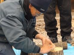 玉切りした切断面に菌を植え付ける(植菌という工程)