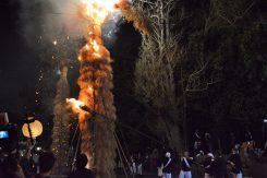 びわ湖のヨシと菜種がらで作られる松明は、祭り手前の日曜日に制作される