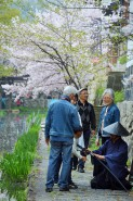 桜の後は菖蒲の花が咲き揃い、また訪れる人を迎えてくれる