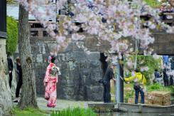 振袖姿の前撮りも桜の風景の内にしていたのかな
