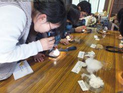 いろいろな綿を顕微鏡で観察