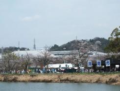 湖南市の春の風物詩「湖南市さくらまつり」