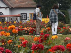 さまざまなバラの香りと、色とりどりの花々に囲まれて