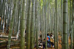 見事な竹が青々と生い茂り、うぐいすの鳴く声が響く