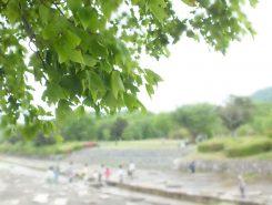 新緑眩い希望ヶ丘文化公園へお出かけしてみては?