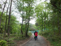 清々しい空気の中、山道を散策