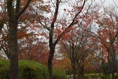 これからどんどん紅葉する信楽の風景も楽しめる