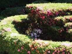 数種類のサツキが植えられ順に花を咲かす