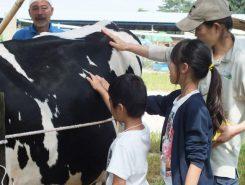 搾乳の前に牛の体についてお勉強!牛には胃袋が4つあるって知ってた!?
