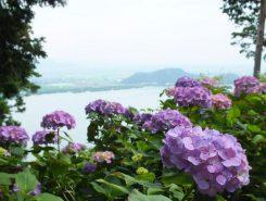 アジサイ越しに琵琶湖を望む