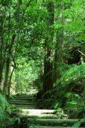 森の中を散策。美しい緑に癒される