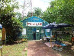 ロクハ公園内のカブトムシ観察小屋が今年もオープン