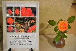 アンネの父、オットーさんから託された平和への思いのバトンが「アンネのバラ」を通じて日本や世界の子どもたちに伝わっている
