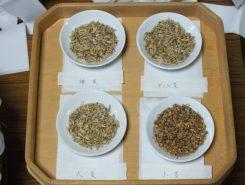 材料の裸麦、ビール麦、大麦、小麦