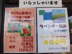 ラベンダー摘みが楽しめる(400円)