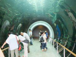 人気のトンネル水槽