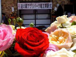 見事なバラ(杉本バラ園)
