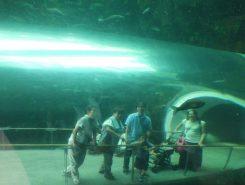 魚と一緒に琵琶湖の中にいるような写真も撮影できるよ^^