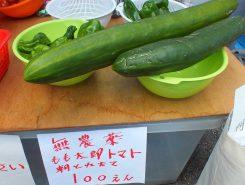 地元の無農野菜。大きなきゅうりのようなナスのような…
