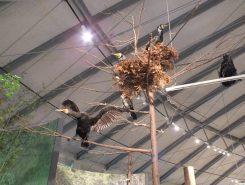 上にも生き物の標本があちこちに展示してある