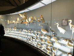 膨大な数の生き物の標本が観察できる