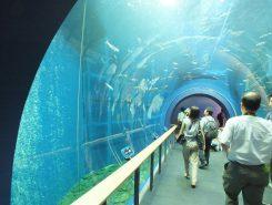 トンネル水槽は水温調整でビワマスなど展示できる魚の種類が増えた。水槽の中の音もリアルタイムで聞こえる