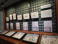 夏季特別展「昆虫」は9月11日(日)まで