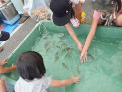 小さい魚とも触れ合える