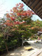 グラデーションが美しい七色紅葉