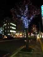 草津駅西口ロータリー付近の街路樹