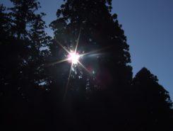鎮守の森に陽が差し込み・・・