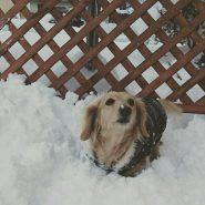 今年は大雪で雪遊びに夢中🎵