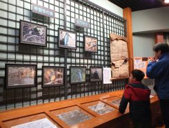 自然館には野鳥の写真を展示中