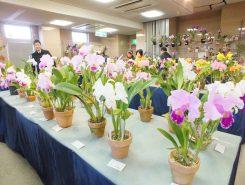 滋賀県最大規模の展示