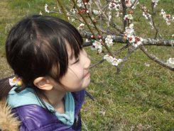 辺り一帯に梅の香りが漂う