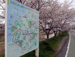 ここは歩行者・自転車専用道路!