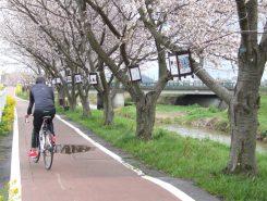 サイクリングを楽しむ人