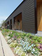 にぎわい活動棟の前は花いっぱい