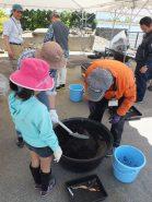 直径約74cm×高さ34cmの大きな鉢にレンコン1本を植え付ける