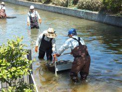 台車のまま、池へ。水圧を利用して、池の奥まで運んで設置