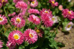 園内のあちらこちらで咲く花。これからの季節はバラが咲き始める