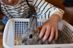 「みにまるランド」でハムスターやウサギなどの小さな動物とふれあおう!