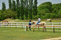 馬とポニーにも乗れる。ゆっくり歩いてくれるので初めてでも安心して楽しめる♪