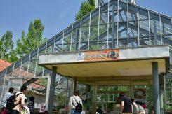 爬虫類展では珍しい種類の蛇やトカゲが展示・販売されていた。大きな蛇を首に巻いての記念撮影もできた