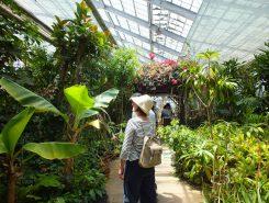 珍しい植物がある温室