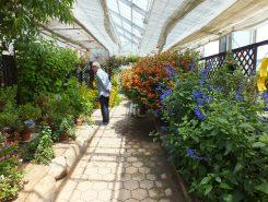いろいろな香りが楽しめる香りの温室