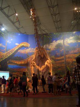 ③トゥリアサウルス復元骨格(半身)