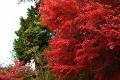 神社を囲む美しい紅葉