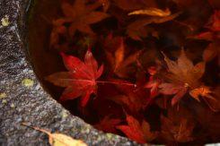 水中の紅葉も風情がある